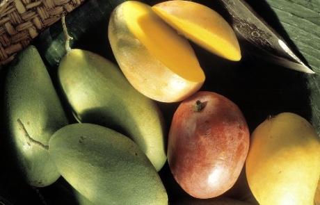 Mangoes-1