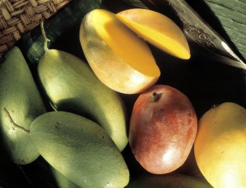 Mango Treatment